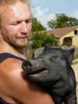 swine2